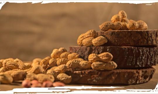 Groundnut or Arachida peanut