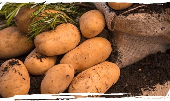 Potato from Alagonia - Kalamata